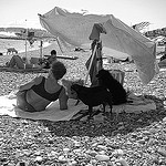 The lady and three dogs par Lenny Farmer - Cagnes sur Mer 06800 Alpes-Maritimes Provence France