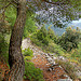 Tapissé - Castellar (06) par Charlottess - Castellar 06500 Alpes-Maritimes Provence France