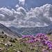 Le col de la Lombarde et la valée de la tinée by chatka2004 - Isola 06420 Alpes-Maritimes Provence France