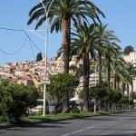 Les palmiers de Menton par Serena Passerotti - Menton 06500 Alpes-Maritimes Provence France