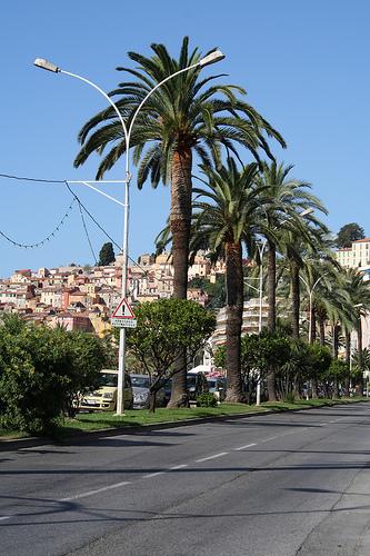 Les palmiers de Menton par Serena Passerotti