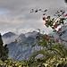 Paysage à la rose - Menton par Charlottess - Menton 06500 Alpes-Maritimes Provence France