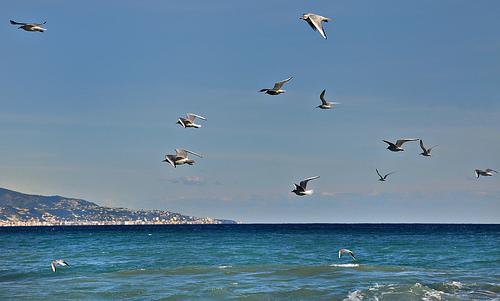 Mouettes sur la côte d'azur par Charlottess