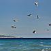 Mouettes sur la côte d'azur by Charlottess - Menton 06500 Alpes-Maritimes Provence France