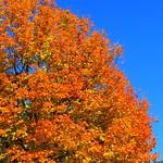 Éclatantes couleurs d'autome par bernard BONIFASSI - Nice 06000 Alpes-Maritimes Provence France