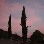 Sunset on cypresses par Sokleine - Puget Theniers 06260 Alpes-Maritimes Provence France