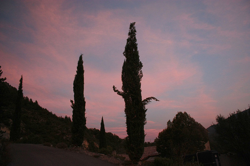 Sunset on cypresses by Sokleine