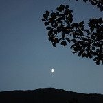Moonlight of September par  - Puget Theniers 06260 Alpes-Maritimes Provence France