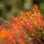 Colors of autumn in Provence par sulian.lanteri - Sospel 06380 Alpes-Maritimes Provence France