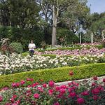 La Roseraie de la Villa Ephrussi de Rothschild by M Barbéro - St. Jean Cap Ferrat 06230 Alpes-Maritimes Provence France
