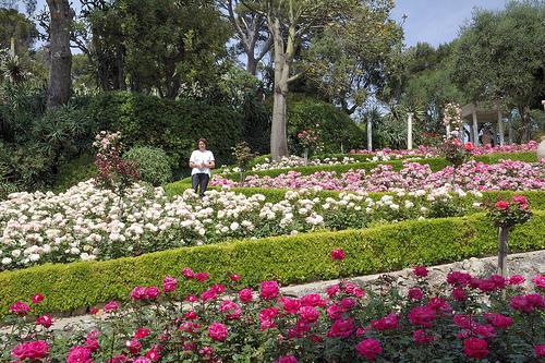La Roseraie de la Villa Ephrussi de Rothschild par M Barbéro