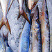 Fish market by  - Villefranche-sur-Mer 06230 Alpes-Maritimes Provence France