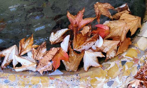 Tisane d'automne by Tinou61