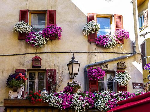 Symphonie en fleurs sur facade by CTfoto2013