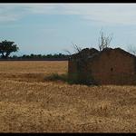 Champs de blé et de lavande à Valensole by Patchok34 - Brunet 04210 Alpes-de-Haute-Provence Provence France