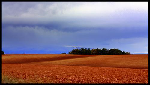 Les champs à perte de vue du Plateau de Valensole by J.P brindejonc