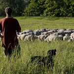 Berger et son élevage by Thierry B - Dauphin 04300 Alpes-de-Haute-Provence Provence France