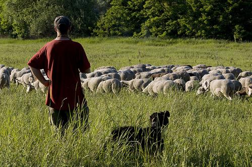 Berger et son élevage by Thierry B