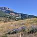 Chardons en altitude - Hautes-Duyes by Charlottess - Hautes Duyes 04380 Alpes-de-Haute-Provence Provence France