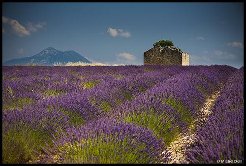 Plateau de Valensole by Michel-Delli