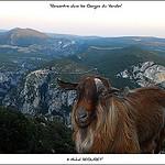 Rencontre dans les Gorges du Verdon par  - La Palud sur Verdon 04120 Alpes-de-Haute-Provence Provence France