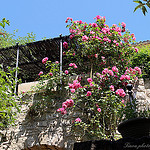 Lurs en fleurs by Tinou61 - Lurs 04700 Alpes-de-Haute-Provence Provence France