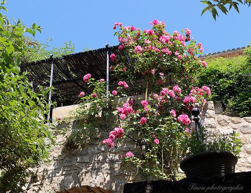 Lurs en fleurs par Tinou61