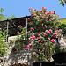 Lurs en fleurs par Tinou61 - Lurs 04700 Alpes-de-Haute-Provence Provence France