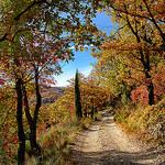 Chemin aux couleurs d'automne - Malijai by Charlottess - Malijai 04350 Alpes-de-Haute-Provence Provence France