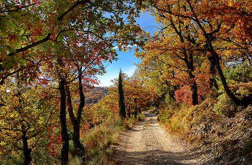 Chemin aux couleurs d'automne - Malijai par Charlottess