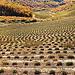 Paysage en Pointillé - Malijai par Charlottess - Malijai 04350 Alpes-de-Haute-Provence Provence France