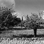 Les oliviers de Mallefougasse par Patrick.Raymond - Mallefougasse Augès 04230 Alpes-de-Haute-Provence Provence France