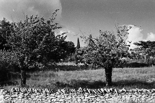 Les oliviers de Mallefougasse par Patrick.Raymond