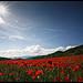 Baignade dans un champs de Coquelicots par Michel-Delli - Mirabeau 84120 Alpes-de-Haute-Provence Provence France