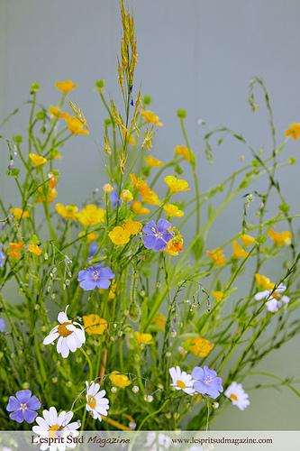 Provence field flowers par Belles Images by Sandra A.