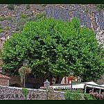 PLATANE, l'autre symbole de la Provence par Sylvia Andreu - Moustiers Ste. Marie 04360 Alpes-de-Haute-Provence Provence France