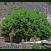 PLATANE, l'autre symbole de la Provence by Belles Images by Sandra A. - Moustiers Ste. Marie 04360 Alpes-de-Haute-Provence Provence France