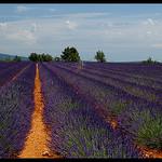 Lavandes à Quinson par Patchok34 - Quinson 04500 Alpes-de-Haute-Provence Provence France