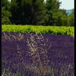 Quinson : contrastes de couleurs... by Patchok34 - Quinson 04500 Alpes-de-Haute-Provence Provence France