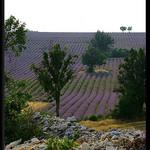Les jolies couleurs de Provence by Patchok34 - Redortiers 04150 Alpes-de-Haute-Provence Provence France