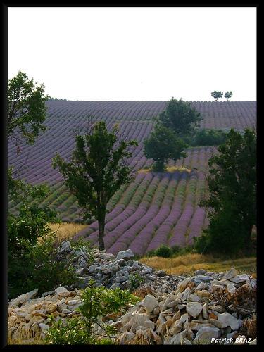 Les jolies couleurs de Provence par Patchok34