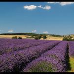 Carte Postale de Provence by Patchok34 - Redortiers 04150 Alpes-de-Haute-Provence Provence France