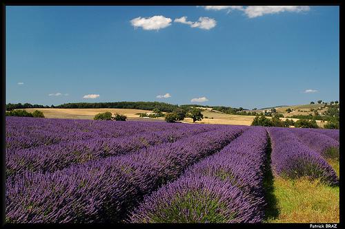 Carte Postale de Provence par Patchok34