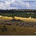Estive sur la montagne de Lure par Rhansenne.photos - Redortiers 04150 Alpes-de-Haute-Provence Provence France
