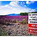 Culture de la Lavande, Message à Bruxelles... par F.I.T. World - Revest du Bion 04150 Alpes-de-Haute-Provence Provence France