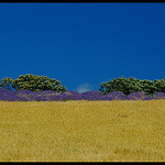 Contraste de Provence by  - Revest du Bion 04150 Alpes-de-Haute-Provence Provence France