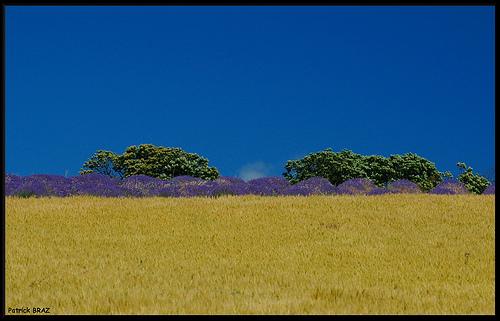 Contraste de Provence by Patchok34