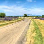 Sur la route, enivré par la lavande by yesmellow - St. Jurs 04410 Alpes-de-Haute-Provence Provence France