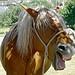 Concours mulassier à Seyne par Margotte apprentie naturaliste 5 - Seyne 04140 Alpes-de-Haute-Provence Provence France