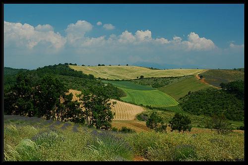 Patchwork de Provence par Patchok34